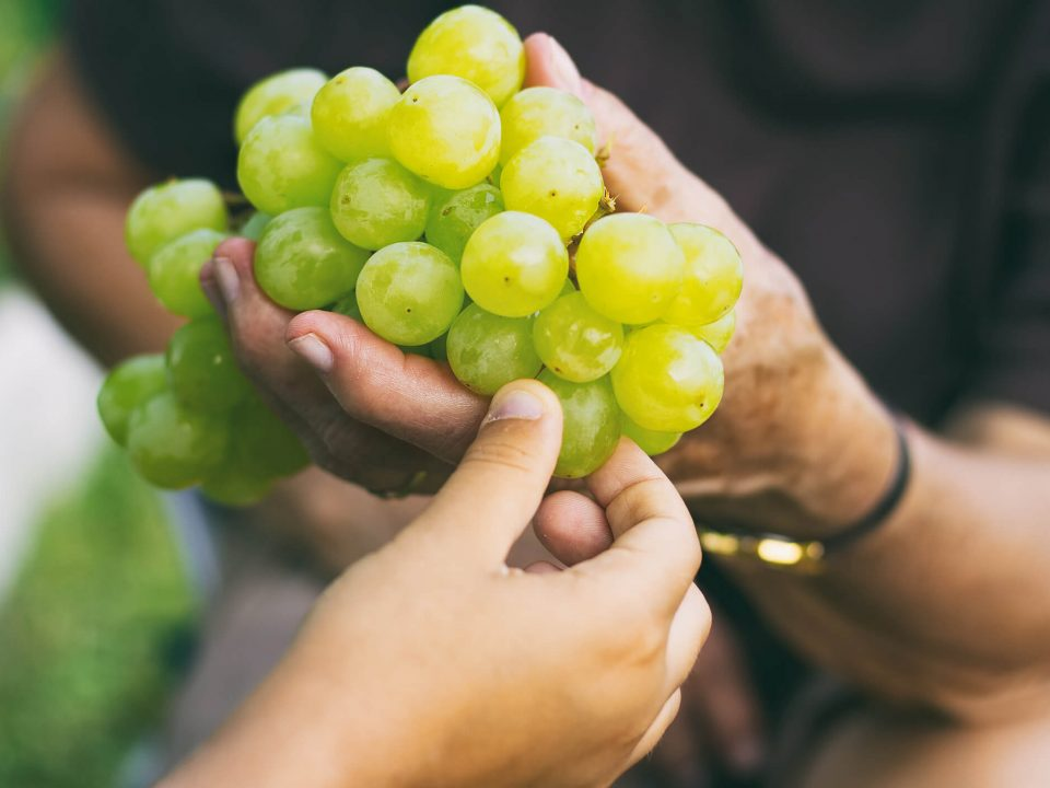 Você sabe quais são os 5 alimentos essenciais para manter a beleza e a saúde da pele? Então, leia o post e descubra quais são os benefícios de incluí-los em sua alimentação diária!